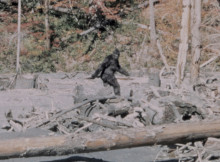 Bigfoot - Patterson Film