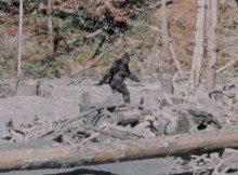 Bigfoot - Patterson Film